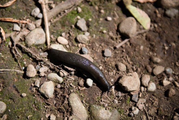 This slug was about 2 inches long. *shudder*