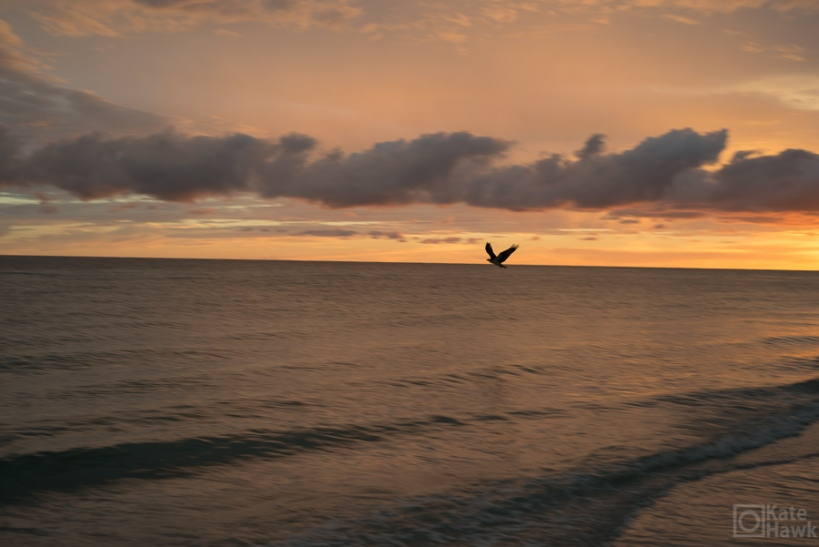 This Osprey hung out on the beach all week. I had zero appropriate setting on my camera to capture this. (I was shooting the sun set when this guy flew close to us.)